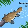 【mannmals】哺乳類!?カモノハシくん