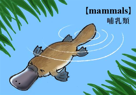 カモノハシの画像 p1_20